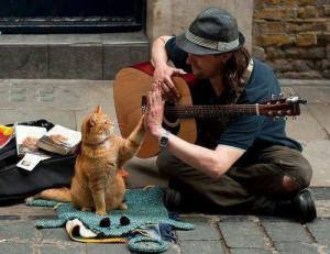 músico callejero con gato