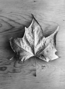 las cuatro estaciones (27): las palabras del otoño