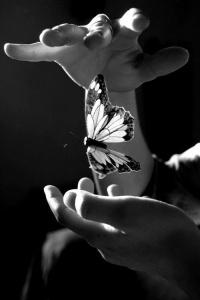 mariposa en las manos