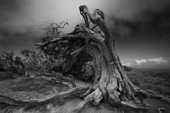 AlexanderKonstantinov - tronco de árbol