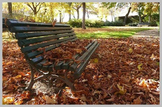 hojas del otoño en un banco