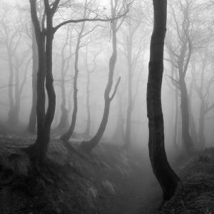 martin-rak-enchanted-forest